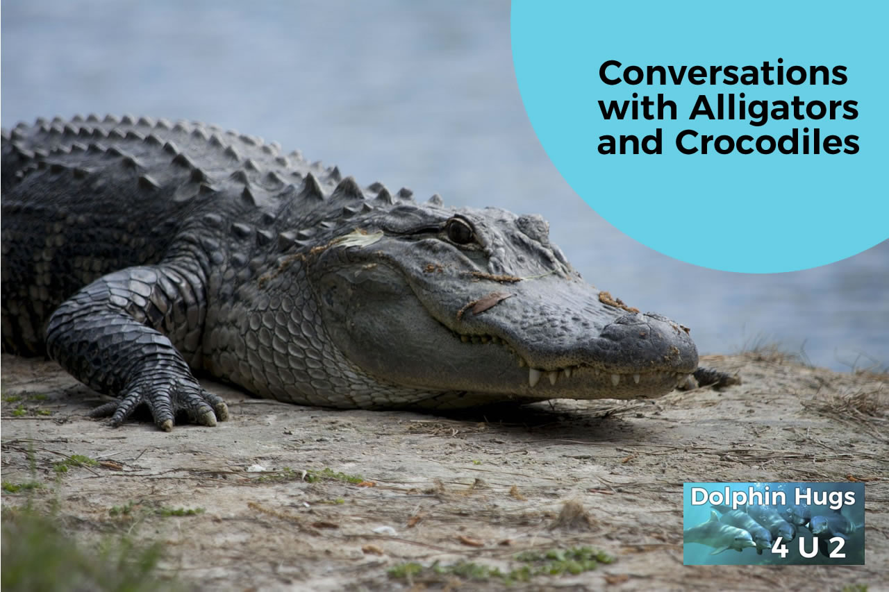 Animal Communication with Alligators & Crocodiles